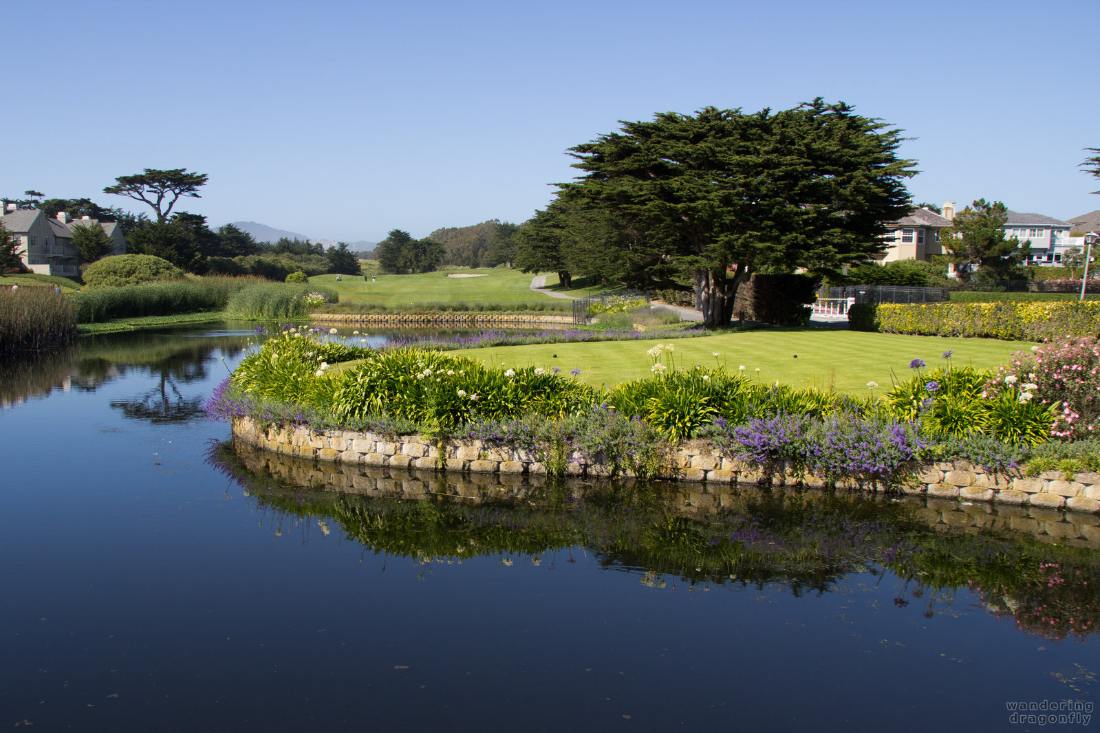 Peaceful environment on the way to the golf courses -- flower, pond, tree