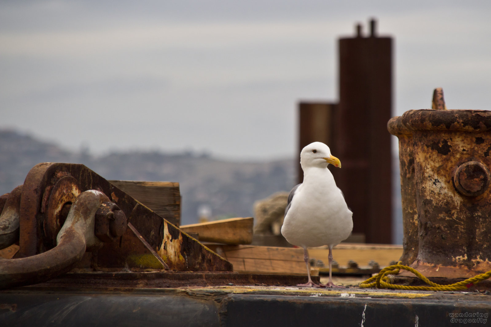 The Landlord -- gull, pier