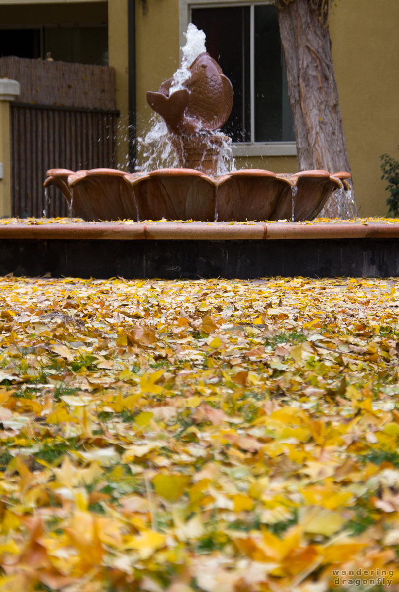 Fishy in the leaf-sea -- autumn, fish, fountain