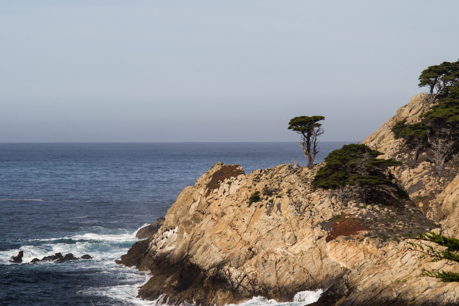 The bravest :) -- cliff, monterey cypress, ocean, tree, water