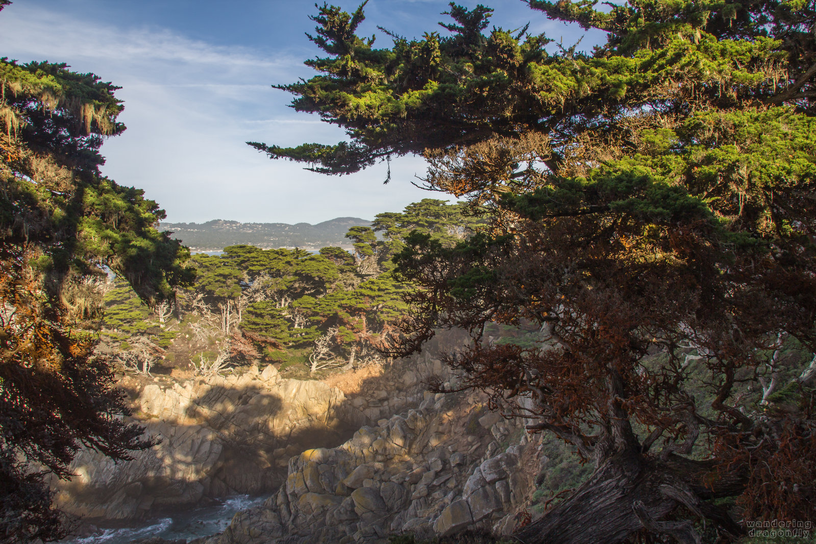 Afternoon lights in the Allan Memorial Grove -- cliff, forest, monterey cypress, rock, tree