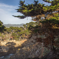 A.M. Allan and his wife were the owners of Point Lobos whose foresight and decades-long work led to its protection and in 1933 it became part of the new state park system.